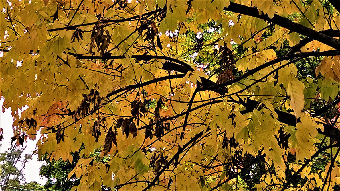 Golden Leaves by WildHeart1125