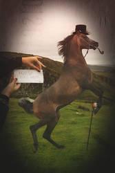 Fancy Horse for tasastock