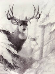 Big Mulie by ShaleseSands