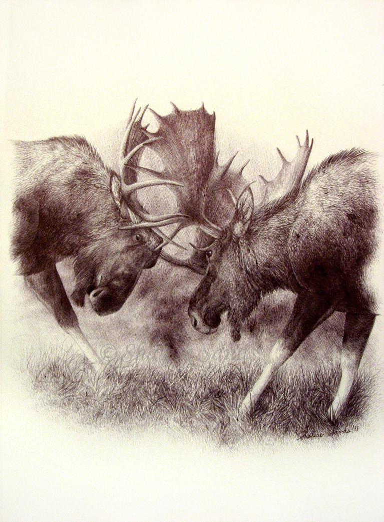 Battling Bulls by Misted-Dream
