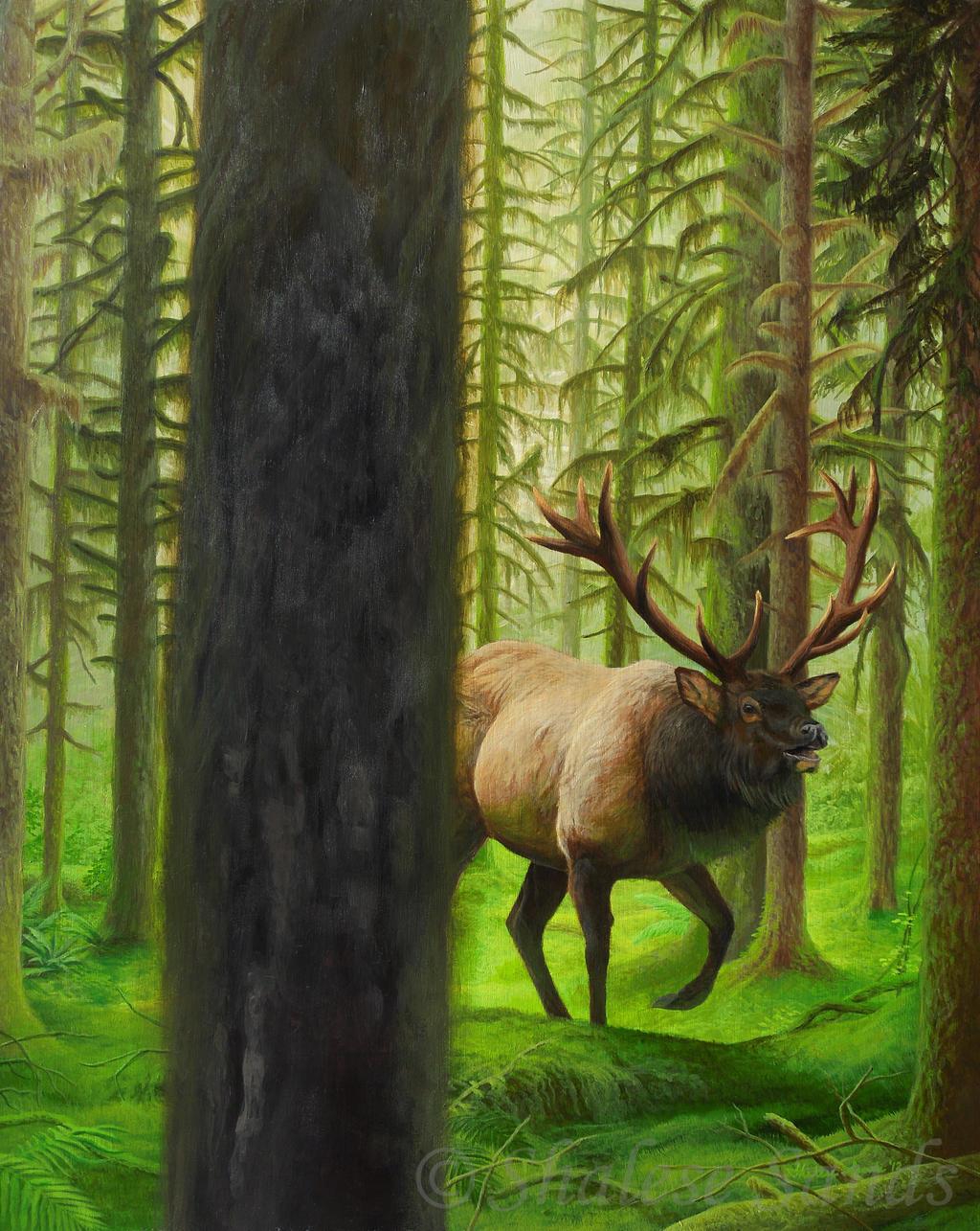 Rainforest King