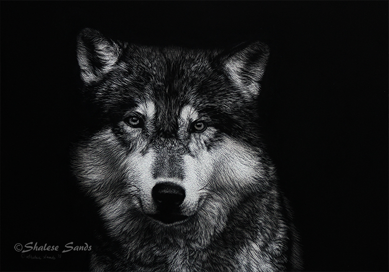 Timber Wolf - Scratchboard by Misted-Dream
