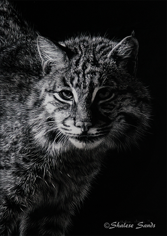 Bobcat 2 - Scratchboard by Misted-Dream