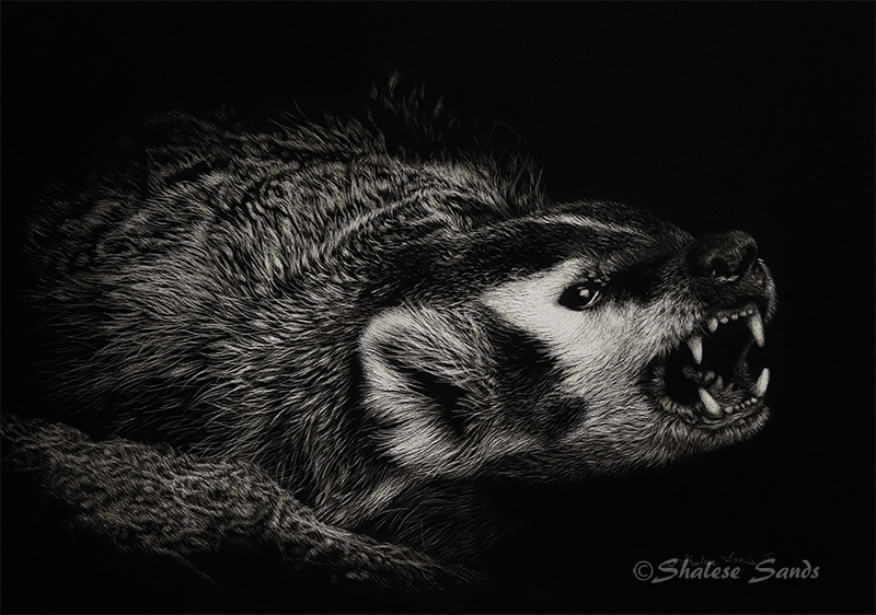Attitude - Scratchboard by Misted-Dream