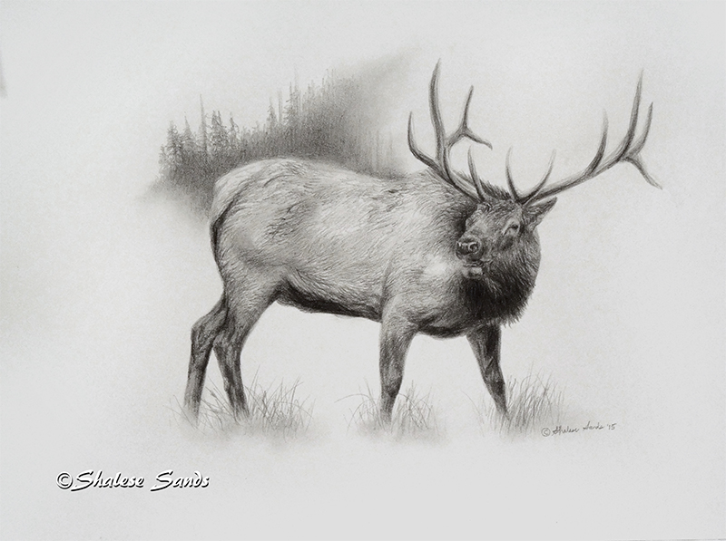 Elk Study by Misted-Dream