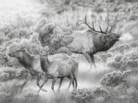 In Hot Pursuit - Drawing