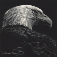 Patriot - Scratchboard by ShaleseSands