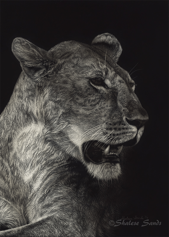 African Queen - Scratchboard by ShaleseSands