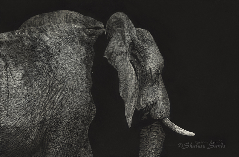 Giant of the Wetland - Scratchboard by ShaleseSands