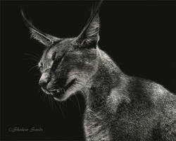 Ginger - Scratchboard by ShaleseSands