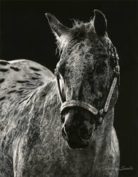 Showstopper - Scratchboard by ShaleseSands