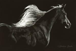 Soaring Spirit - Scratchboard by ShaleseSands