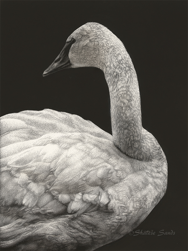 Grace - Scratchboard by ShaleseSands