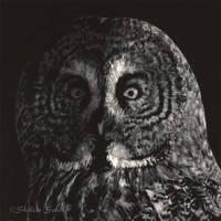 Gray Ghost - Scratchboard by ShaleseSands