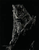 Focus - Scratchboard by ShaleseSands