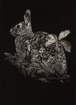 Bright-Eyed and Bushy-Tailed - Scratchboard