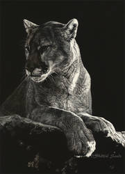 Repose - Scratchboard by ShaleseSands