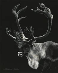 Tundra King - Scratchboard