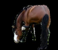 Horse Pre-cut 1 by Sasha8702