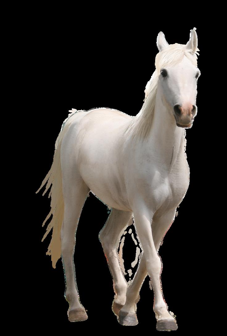 صور احصنه بدون خلفيه png سكرابز حصان png صور احصنه horse_pre_cut2_by_sasha8702-d62tahn.png