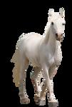 Horse-pre-cut2