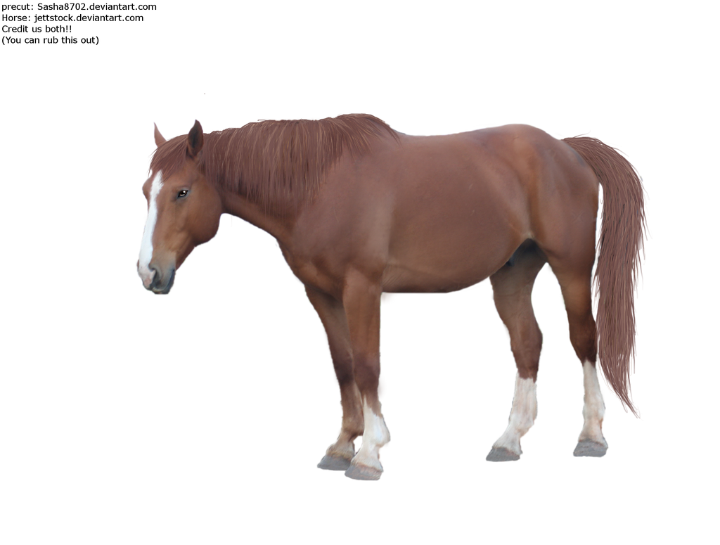 лошади png картинки