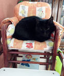 The Cat In The Children's Chair