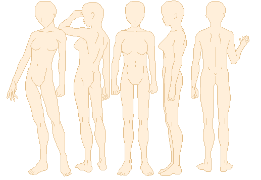 male and segmentation base Objective segmentation is a necessary step when creating realistic three-dimensional (3d) models in order to build 3d models of whole body structures and have a wider lateral application, the thin sectional anatomical images of the chinese visible human (cvh) dataset should be segmented.