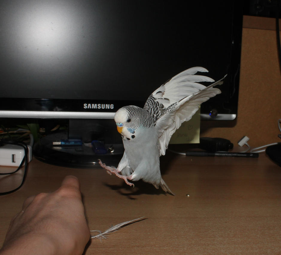 Landung by myfriendrudi