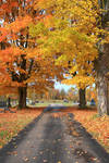 +Autumn Path 3+