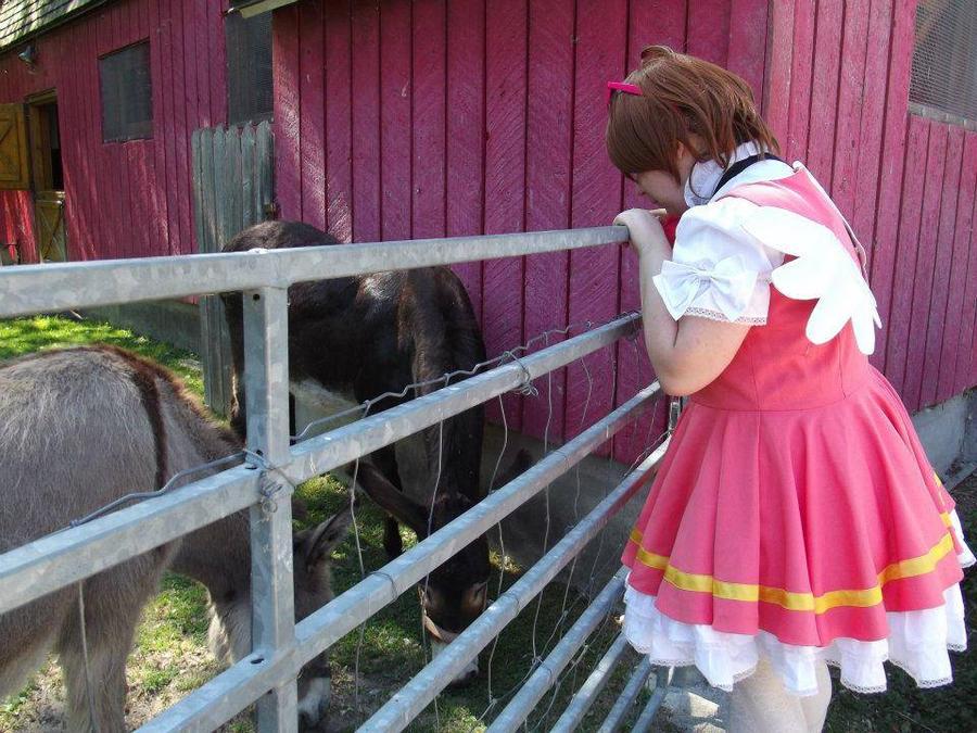 Cardcaptor Sakura Animal Fun by Crissie-Ki