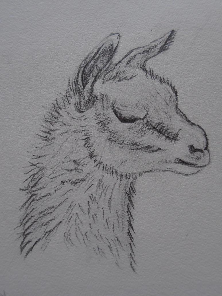 Alpaca sketch by REMylius on DeviantArt