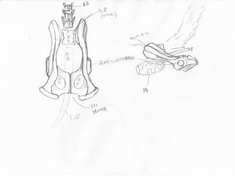 anatomy note 08