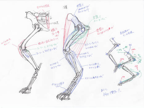 anatomy note 10