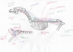 anatomy note 12