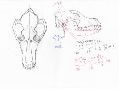 anatomy note 13