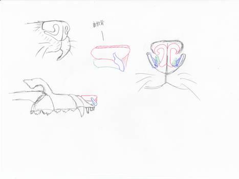 anatomy note 14