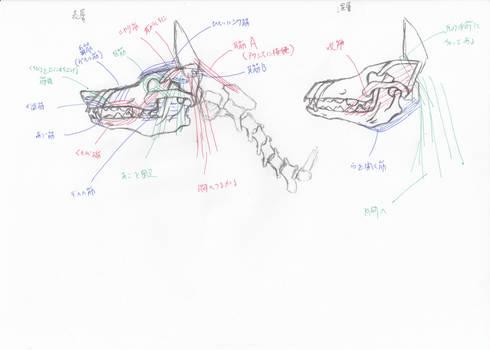 anatomy note 15