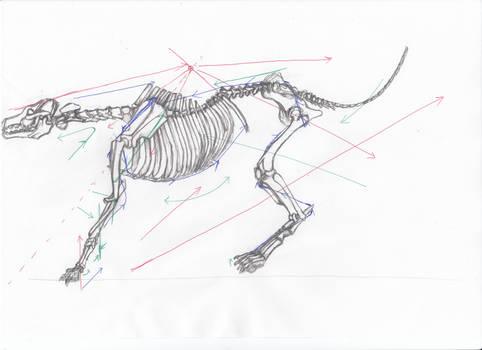 anatomy note 16