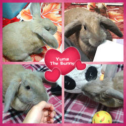 Yuna The Bunny by Grace-Zed