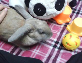 Yuna The Bunny 2 by Grace-Zed