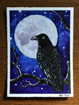 Wise Raven