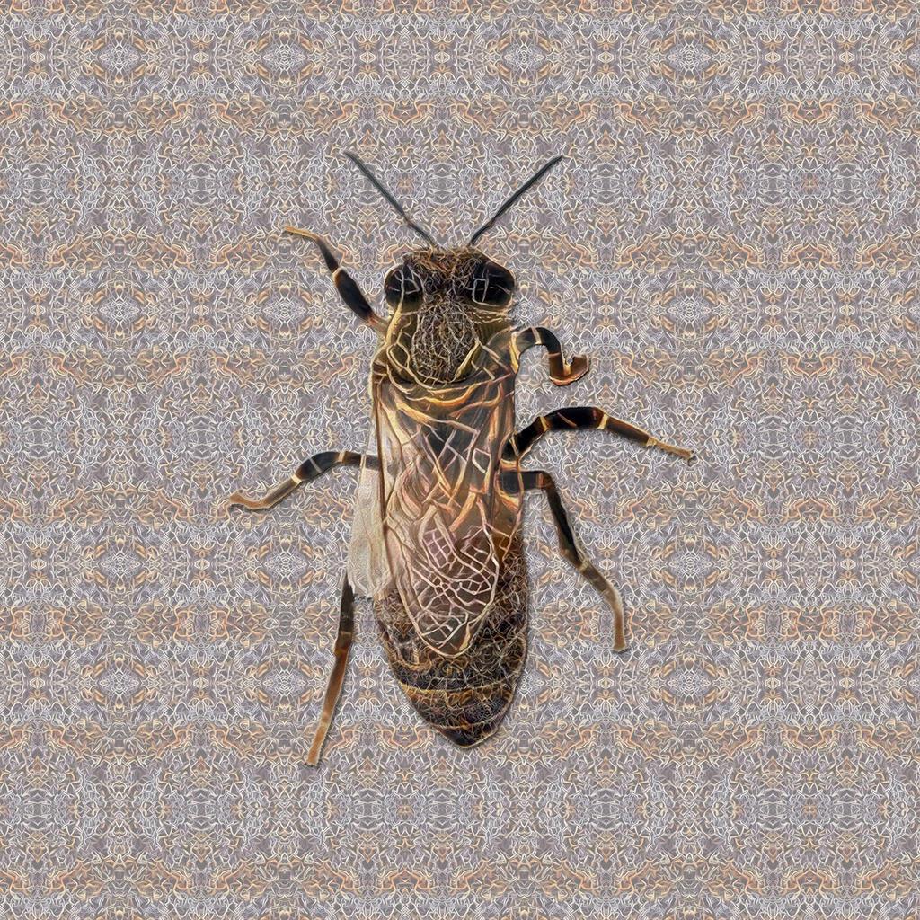 Queen Bee Wanna Be #2 by zuzugraphics
