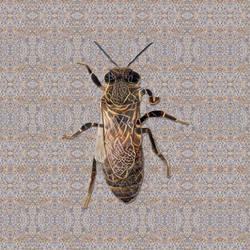 Queen Bee Wanna Be #2