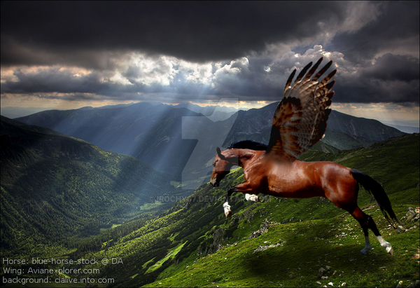 Pegasus Flight by Irochy07