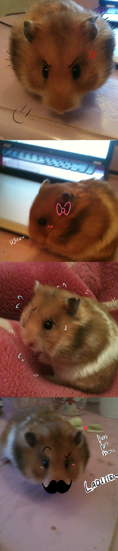 my fatass hamster : mochi by 9-6Valshe