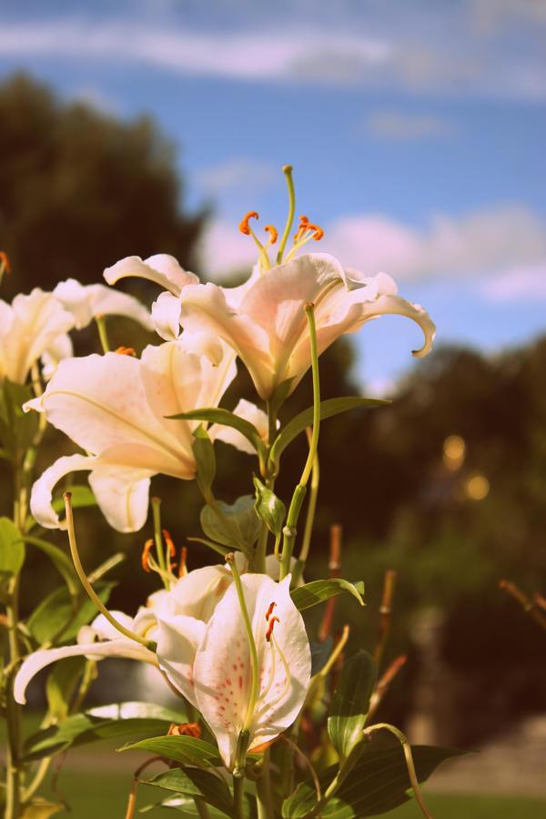 Bloom by Pitaten2