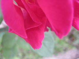 Flower 1 by Nefertaery2007