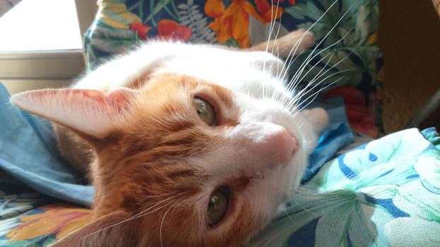 Love me im a cat
