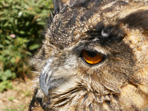 The eagle's eye.